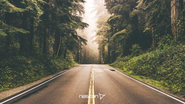droga o nawierzchni asfaltowej prowadząca przez las